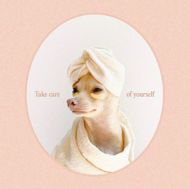 A little reminder from @boobie_billie to make self-care a priority 💕  #yesto #selfcare #wellness #skincare #skincarelover #cute #dog #pamper